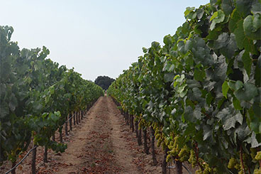 Hyde Vineyard