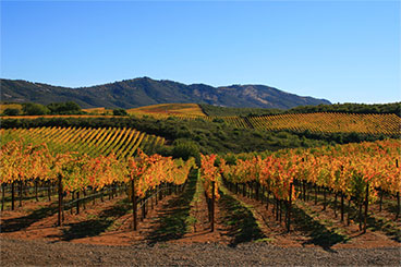 Stagecoach Vineyard
