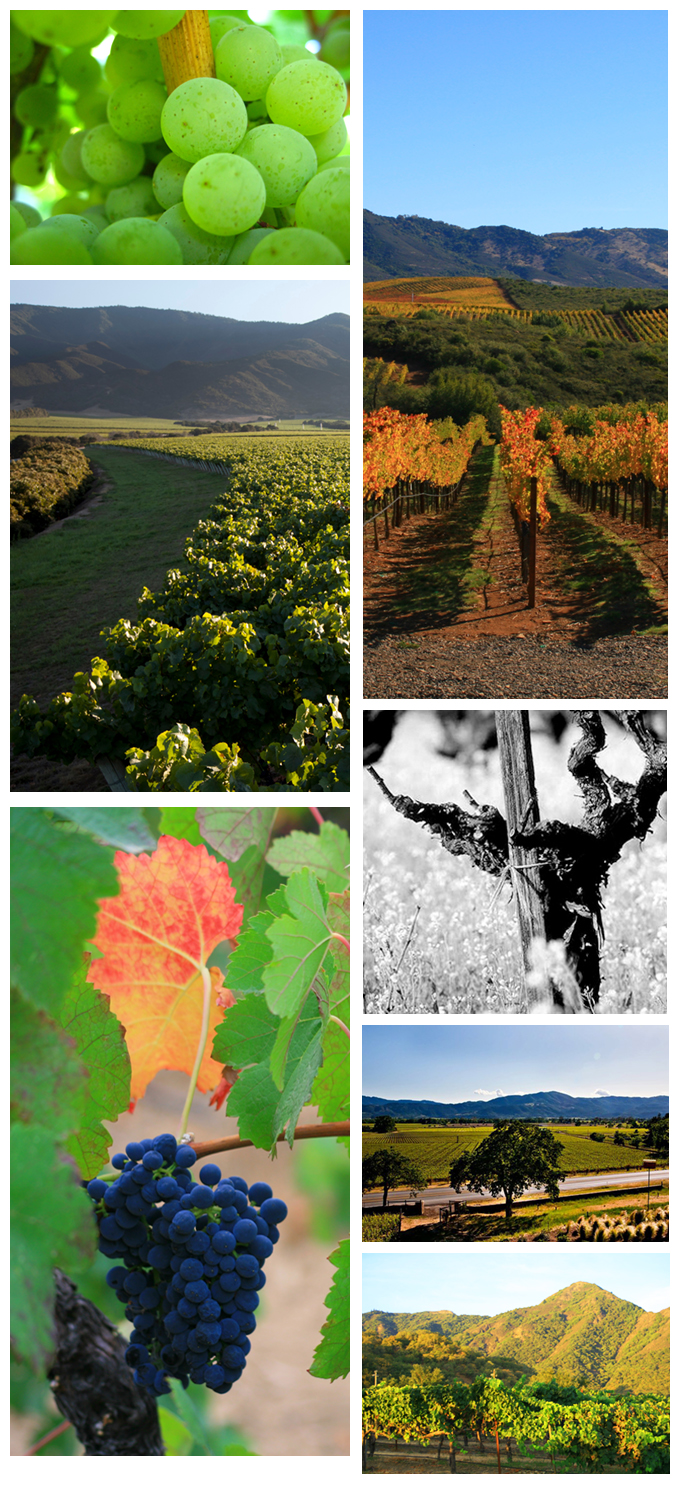 blog_vineyard_photography