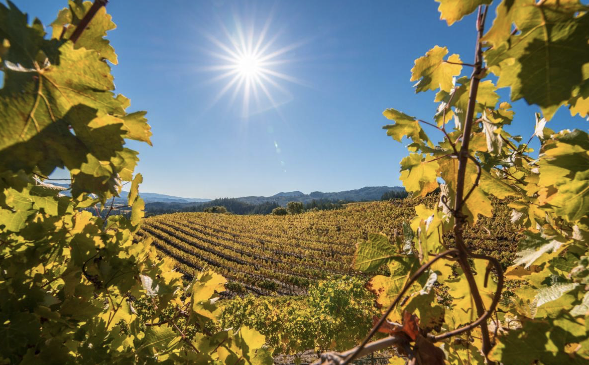 Post Fire Wine Country: Yes, We're Open!