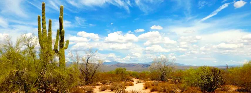 Three Days in the Desert